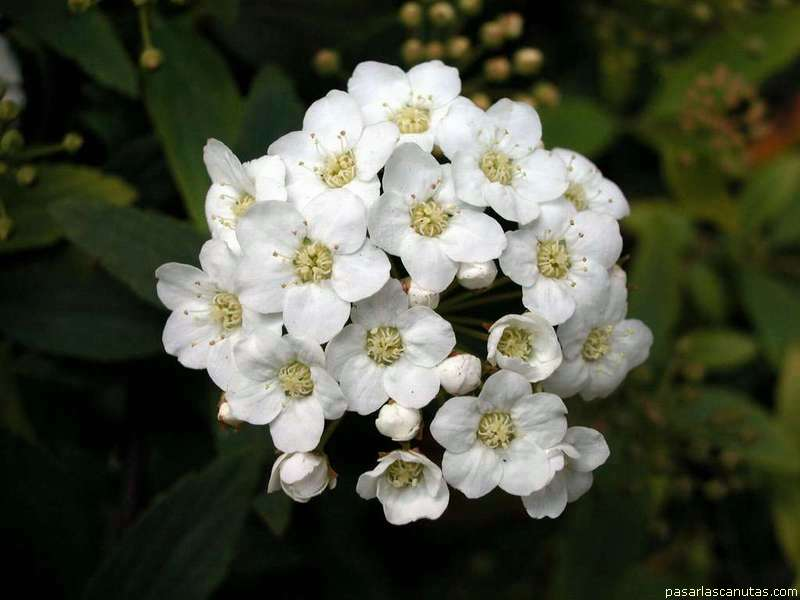 Flores Blancas Png 800 600: Fondos De Pantalla De Alta Calidad De Flores 2