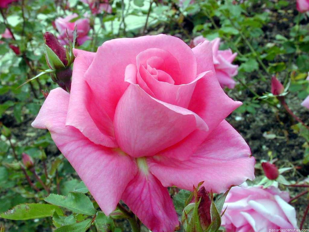 imagenes de flores - photo #9