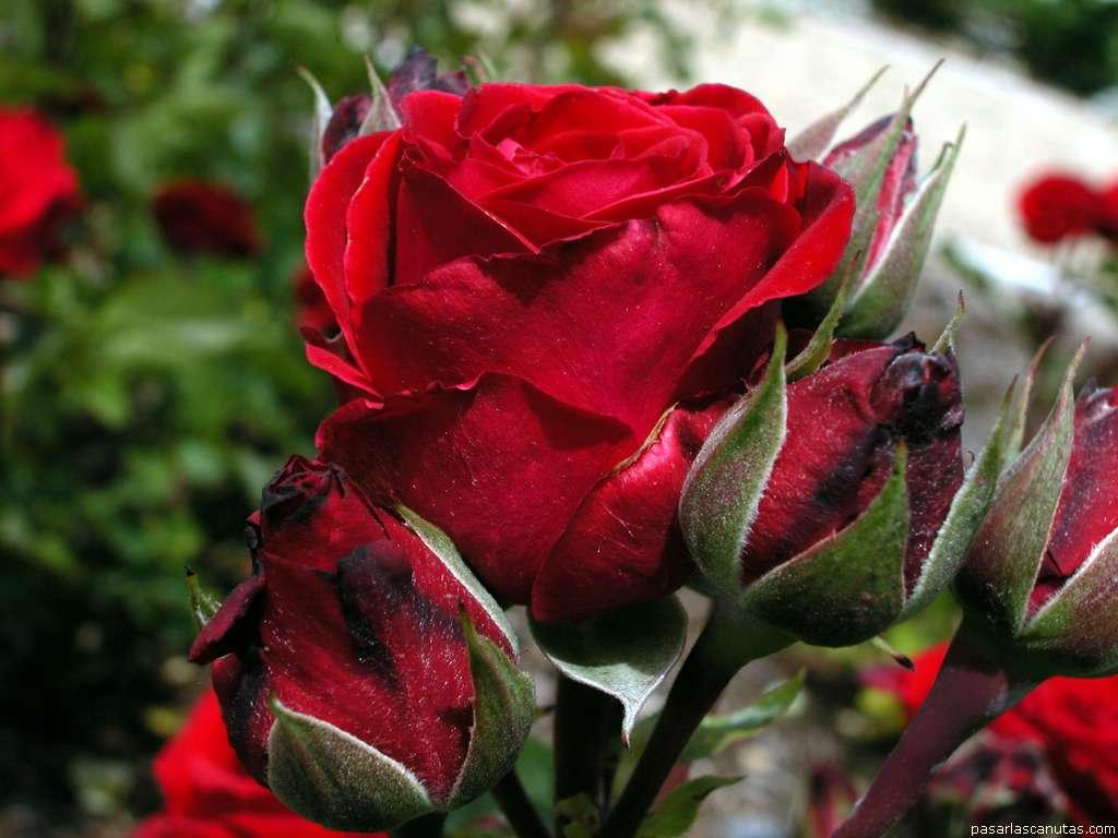 incontri foto de flores Bari