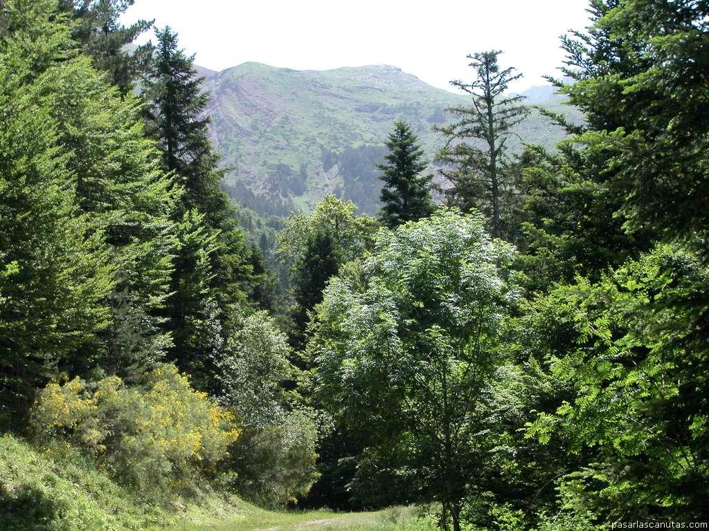entrada selva Selva_de_oza_1383